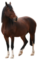 Bay Horse Pre-Cut by ChocoLatteAndVanilla