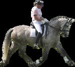 Dapple Gray Dressage Horse Pre-Cut