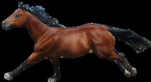 Galloping Chestnut Horse Pre-Cut