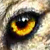 Wolf Eye Avatar by Finchley