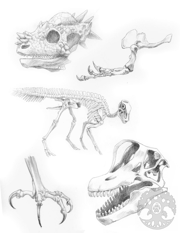Animal Anatomy sketches - 1 by Shadow-Wolf