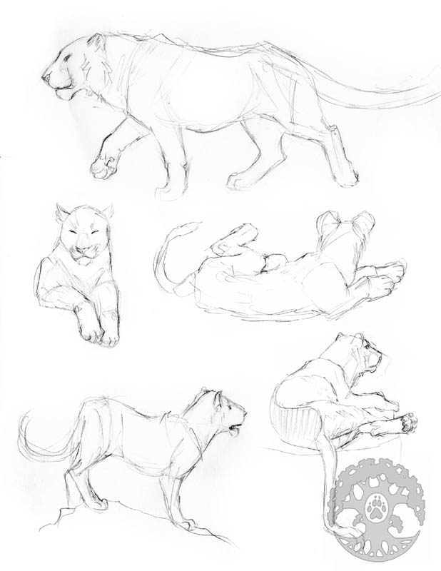 Animal Anatomy sketches - 5 by Shadow-Wolf
