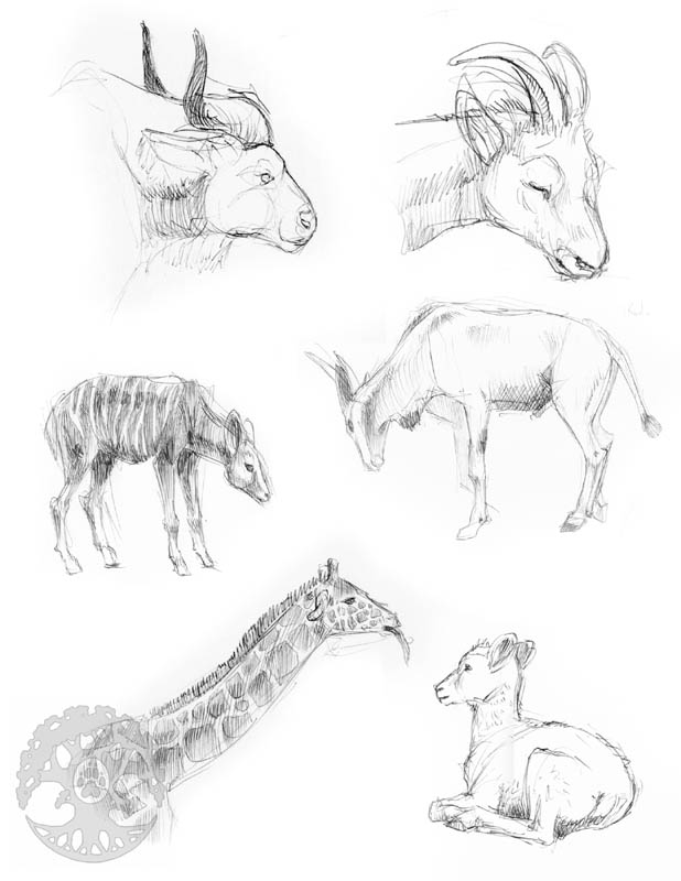 Animal Anatomy sketches - 6 by KatieHofgard on DeviantArt