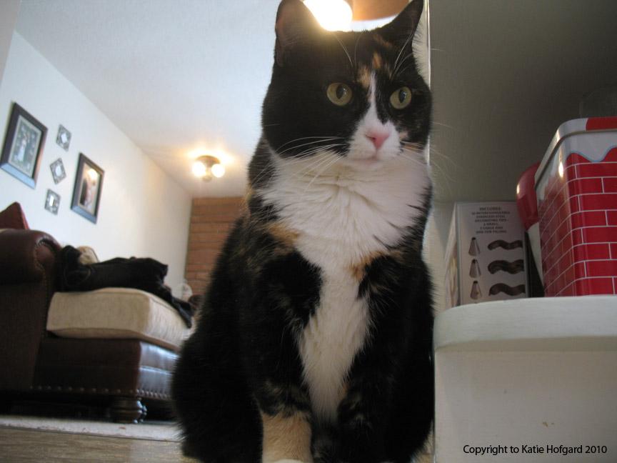 Scramble Cat by KatieHofgard