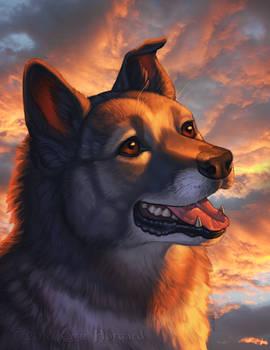 Einar Pet Portrait