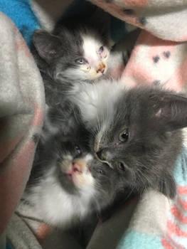 ROCKET CAT RESCUE NEEDS YOUR HELP