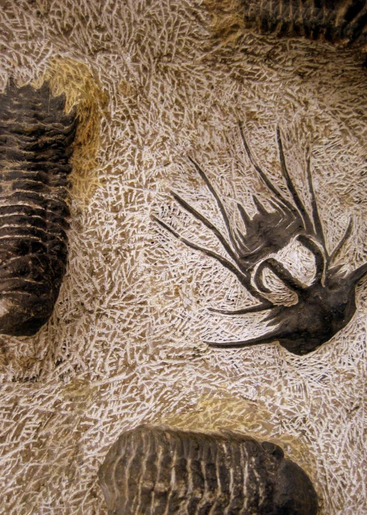 Moroccan Trilobite Plaque