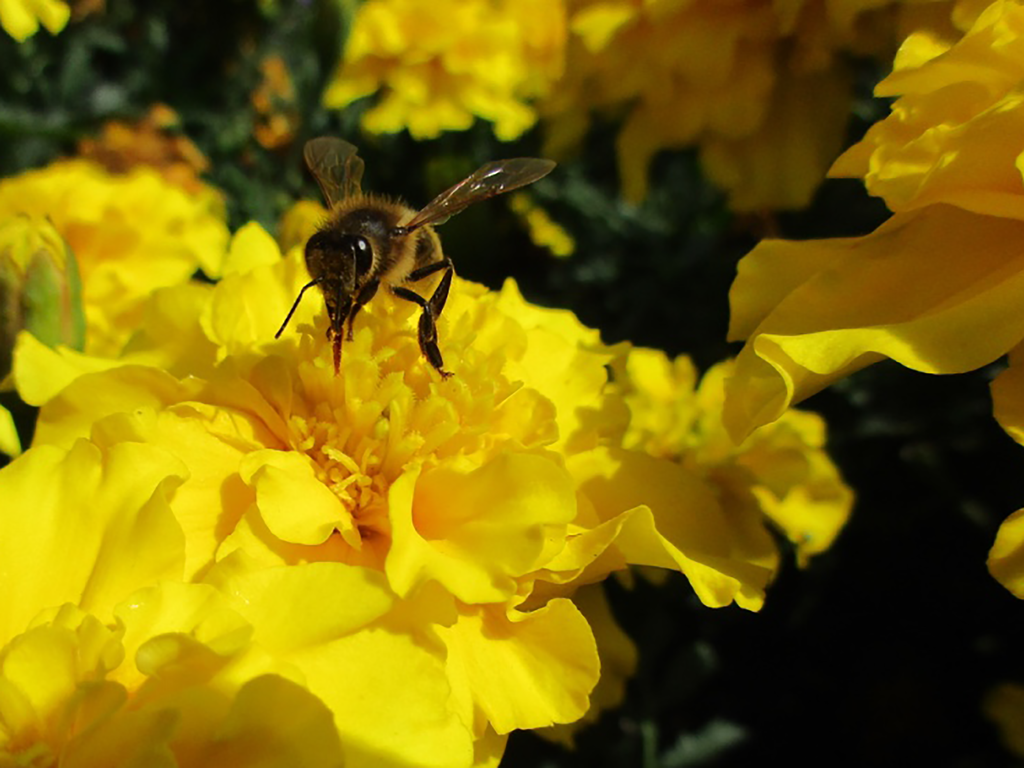 Bee on Flower by TheNeverEndingPit