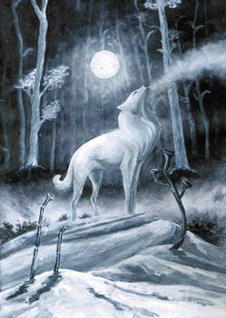 White wolf in frosty wood