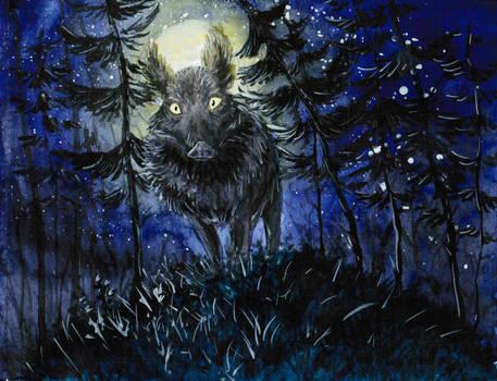 Wild boar at night