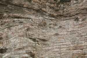 wood texture 02 by arkaydo