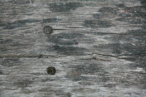 wood texture 06 by arkaydo