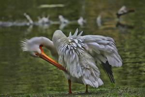 Pelican HDR by d3lf
