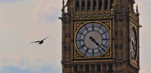 Pigeons rule London