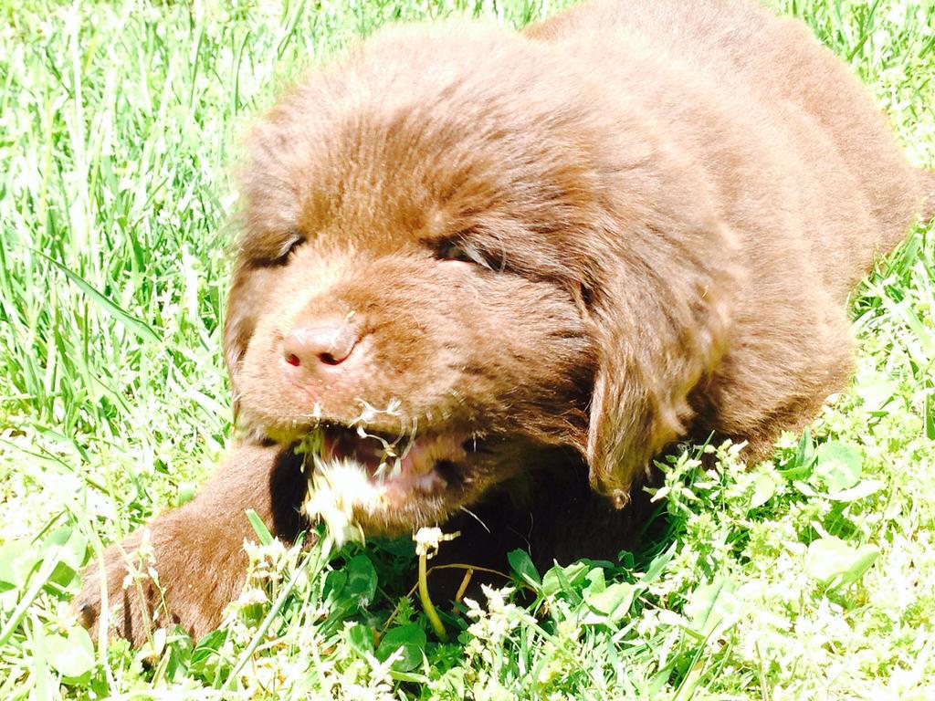 My new dog wally by zzandrewshadow
