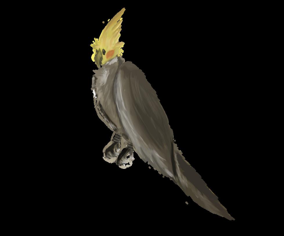 Cockatiel by Wetstream