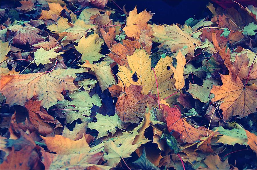 leaves. by cute-sho