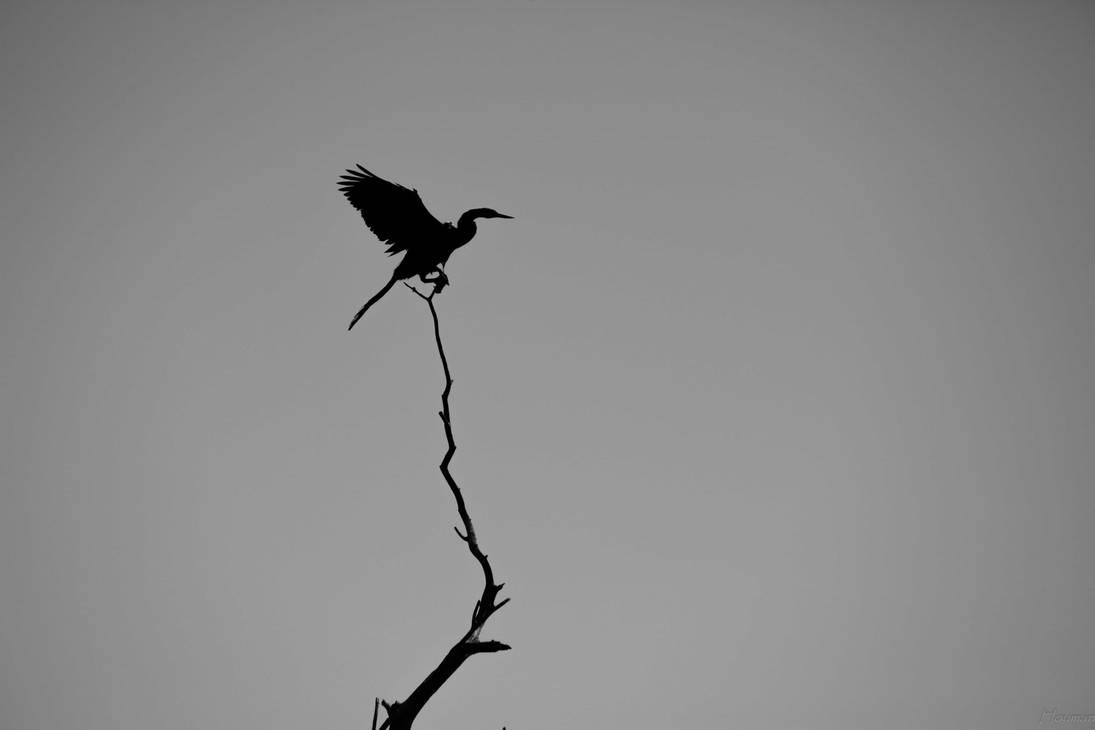 Shades of Black and Grey by hosagu