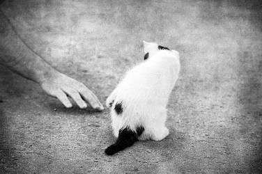 playing kitten by AlexEdg