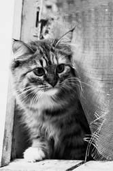 Cat. 01 by AlexEdg