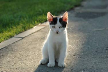 Kitten. 02 by AlexEdg