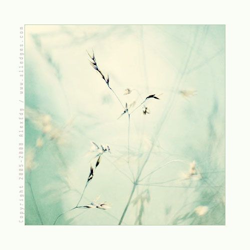 اليك خلفيات لتصميمك ،فأبدع لنا Grass__03_by_AlexEdg