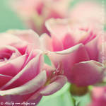 Roses-Lensbaby Composer - III by AlexEdg