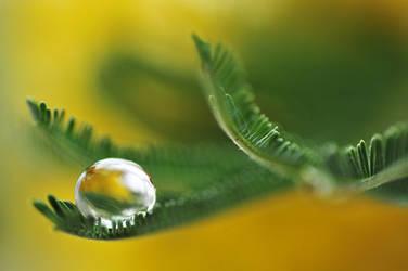 droplet 09 by AlexEdg