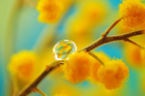 droplet 010 by AlexEdg