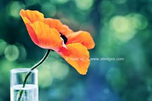 Poppy  -III by AlexEdg