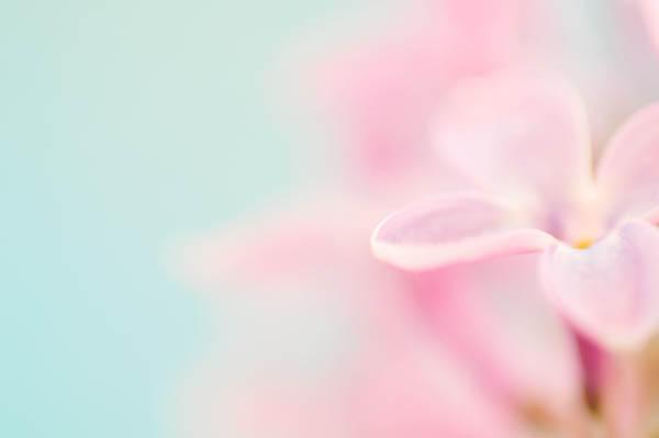 Lilac - VII by AlexEdg