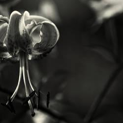 Untitled. 057 by AlexEdg