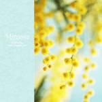 mimosa - IV