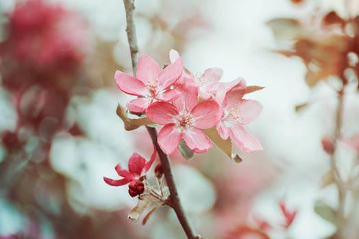 Spring Blossom by AlexEdg