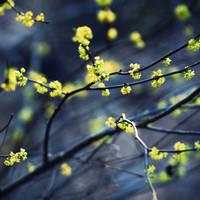 Organic Blossoming- Heavy Dew by wjacks14