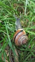 Snail by BigDarthMaulFan