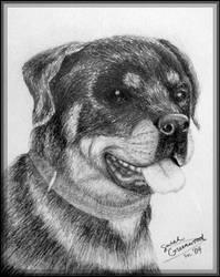 Rottweiler by sufistuk8ed