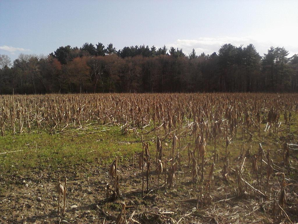 The Dead Field Of Corn By Darkraimare