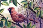 Cardinal Acrylics