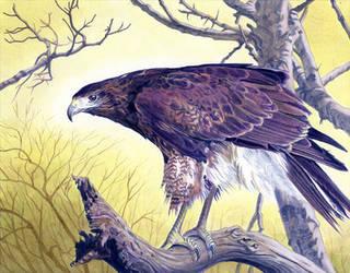Hawk Landscape by Alanpaints