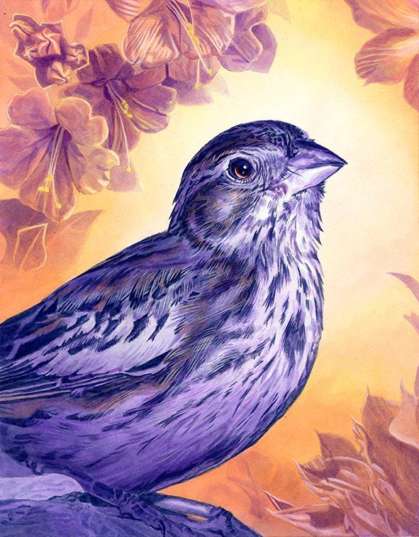 Finch by Alanpaints