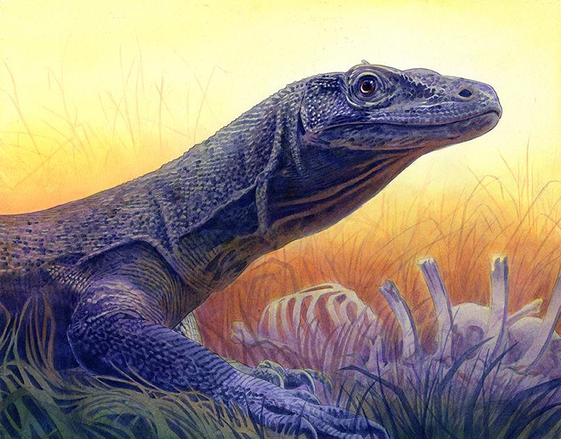 Komodo Dragon by Alanpaints