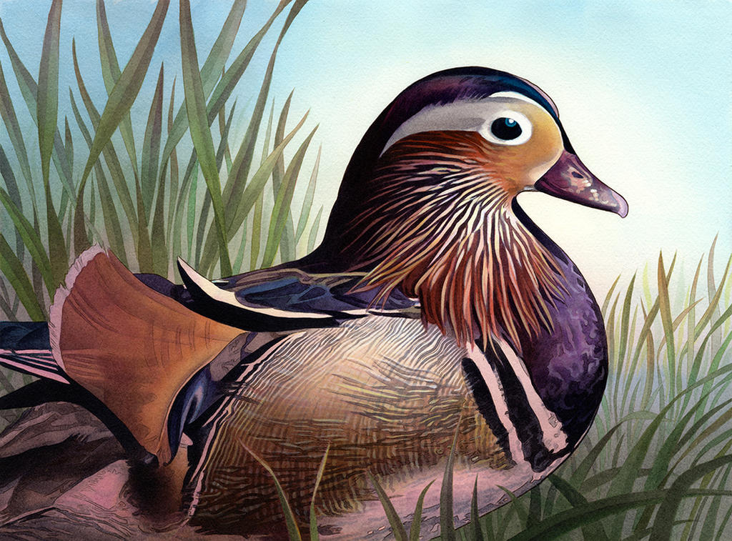 Mandarin Duck by Alanpaints