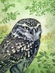 Owl Acrylics