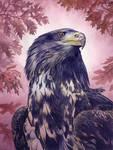 Eagle Acrylics by Alanpaints