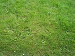 Texture: Grass by ivelt-resources