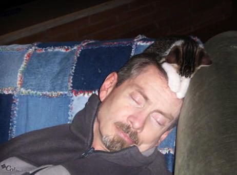 oscarcat and nova sleep