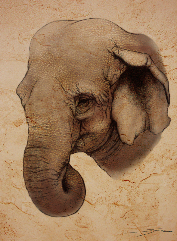 Indian Elephant Face D...