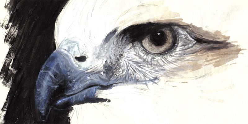 Bird of Prey - Painting by Eenuh