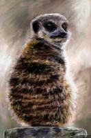 Meerkat by Eenuh